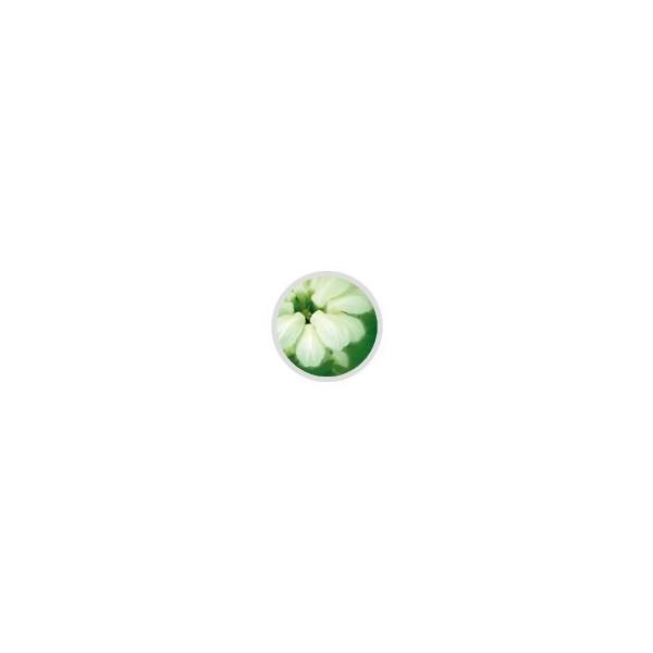 Eye Envy - Smacchiatore Occhi Cane- Soluzione