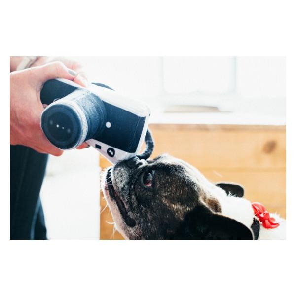 Milk & Pepper Bulldog - Harlington - Coat