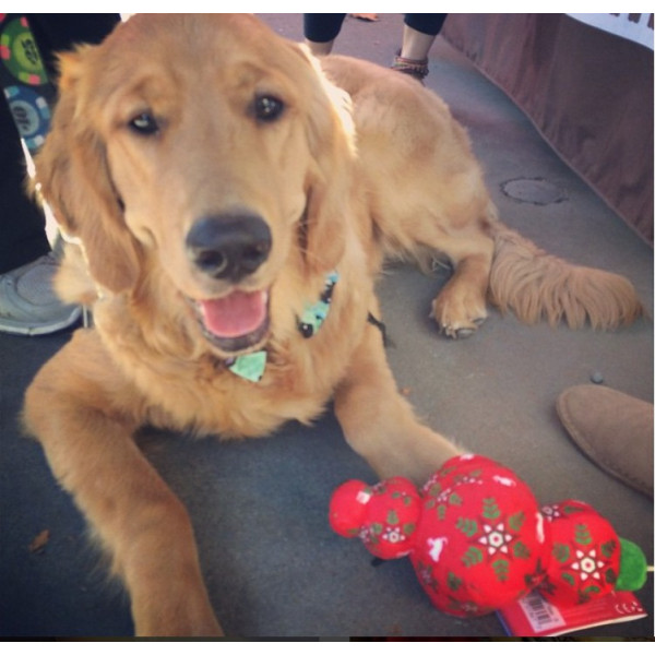 Dog Diggin - Gioco per Cani - Chewy Vuiton Bone Regular
