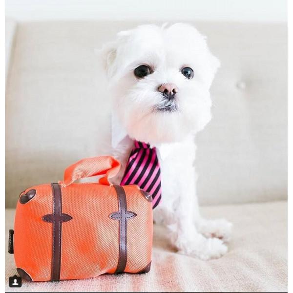 Dog Diggin - Gioco per Cani - Profumo Sniffany