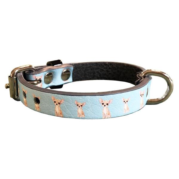 MQ- Collare Azzurro Chihuahua